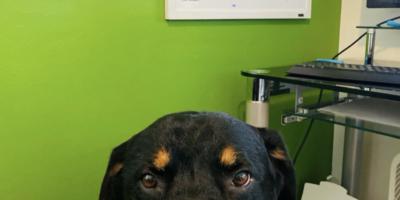 Colleen's dog Brutus